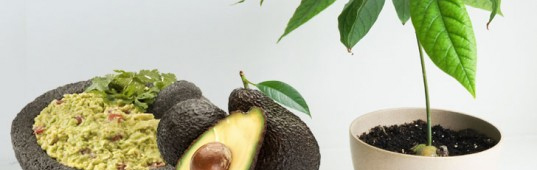 readers choice 2012, top green stories of 2012, eco stories of 2012, green news 2012, best stories of 2012, inhabitat readers choice winners, how to grow an avocado tree