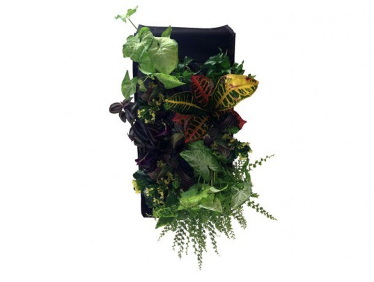 farm buddy, green wall, green wall kit, grow your own green wall, living wall, living wall kit, plant wall, vertical garden, home vertical garden, vertical garden kit