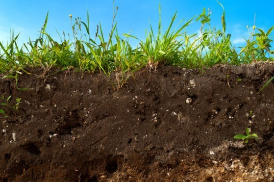 Soil, topsoil, fertile soil, dirt, cross-section of soil