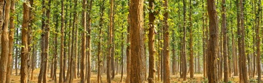 readers choice 2012, top green stories of 2012, eco stories of 2012, green news 2012, best stories of 2012, inhabitat readers choice winners, indian man plants a forest