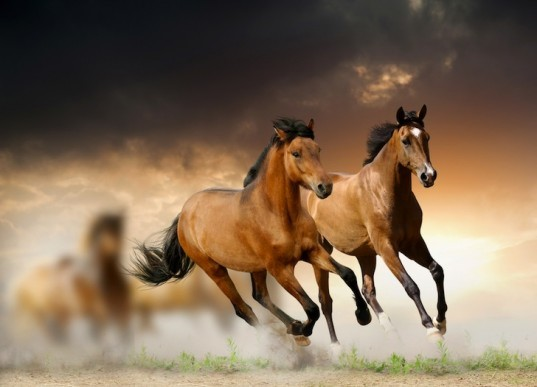 horse meat scandal, horse DNA, Burger King, whopper, rein in Burger King horse meat scandal, fast food, UK, silvercrest, ABP Food group, Ireland, environment, food and health, news