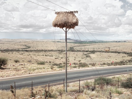 photography, art, eco-art, weaver's nests, nature knows best, climate controlled nests, africa, kalahari desert, sociable weavers, Dillon Marsh, environment, travel, nature, birds, adaptation, assimilation, africa, southern africa