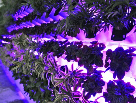 miniwiz, verticult, green wall, eco design, sustainable design, growing wall, environmental design, post consumer waste