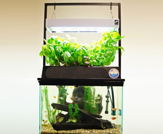 ECO-Cycle Aquaponics Kit, aquaponics, indoor garden, aquaponic garden, green gardening, container garden, sustainable design, green design, ecolife foundation, green products, indoor gardening, green interiors