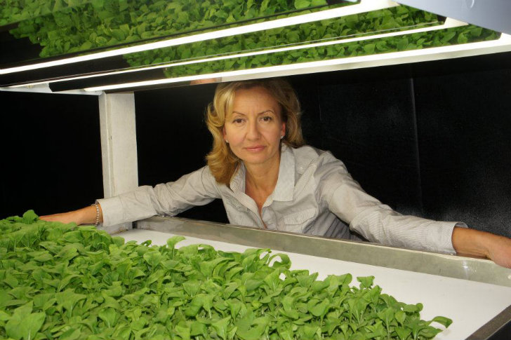 FarmedHere: The Nation's Largest Indoor Organic Farm Now Growing in Chicago