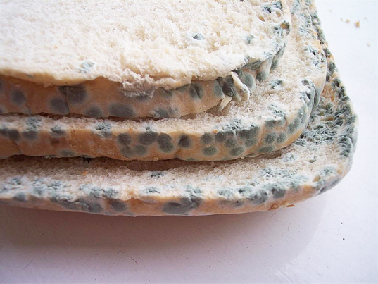 moldy food, fungi leftovers, food industry, food preservation, food waste reduction, bacteria food preservation, food shelf life, bread shelf life, Applied and Environmental Microbiology, scientific research food, sourdough bread