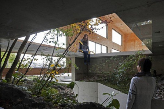 UID Architects, Nest House, Hiroshima, cat, forest, Japanese design, Architecture, Daylighting, green Interiors, Botanical,