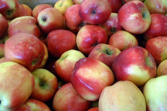 Red apples, apples, fuji apples, ripe apples, GMO apples, hyopallergenic apples