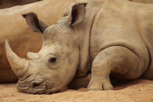 Science, rhino, nature, wildlife conservation, CITES, poaching, illegal wildlife trade, drones, legal rhino trade, rhino horn, china, chinese medicine, environment, news