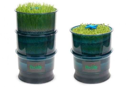 freshlife sprouter, indoor gardening, urban gardening, green, eco, sustainable