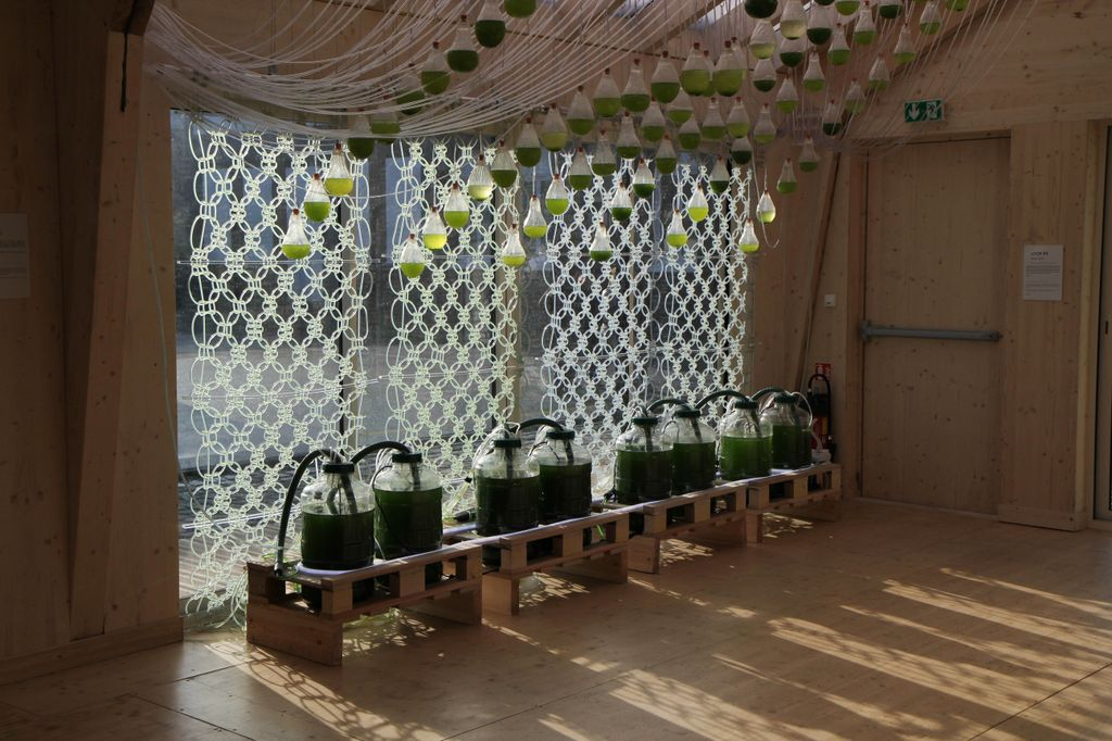 Loop.pH's Algae Curtain-a Is a Living Photosynthesizing Textile Installation That Provides Bio-Fuel