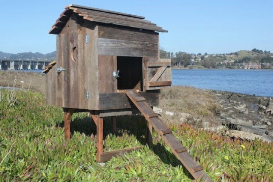 laughing chicken chicken coop, laughing chicken, chicken coop, portable chicken coops, reclaimed wood, recycled chicken coop, redwood chicken coop