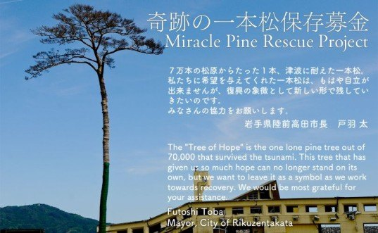 miracle pine, Japan, tsunami, earthquake, natural disaster, forest, preservation, conservation, art, sculpture, memorial