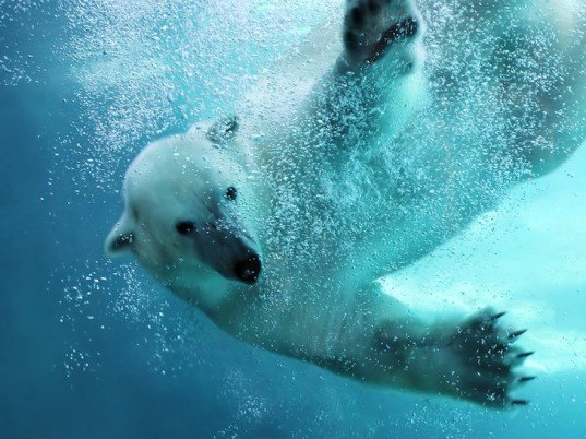 trans arctic passage, arctic, north pole, northern sea route, cargo shipping, melting ice, climate change, global warming, wildlife, environmental destruction, university of california,