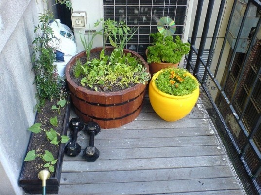 Potted garden on a balcony