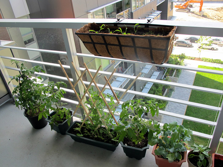 Diy How To Plant A Personal Garden In Small Urban E Inhabitat Green Design Innovation Architecture Building