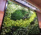 GSky Adds Two Green Walls to West Elm's New Store in Dubai