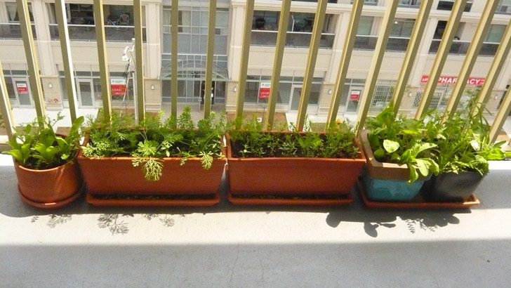 Leafy Greens Growing On A Patio
