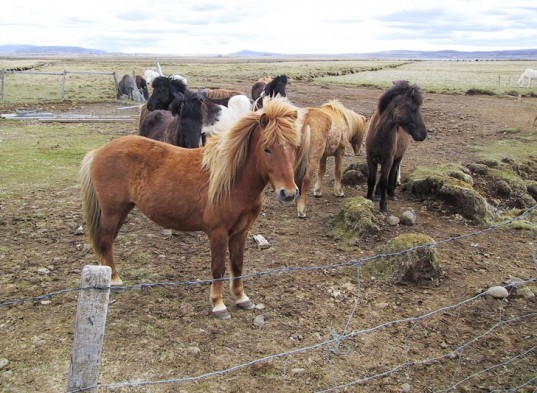 green design, eco design, sustainable design, horse poop biofuel, alternative energy, biofuels, commercial production of biofuels, poo power, horse manure fuel