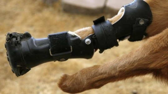 othopets, naik'o, prosthetic limbs, fake limbs, bionic limbs, dogs, robo dogs, martin kaufmann