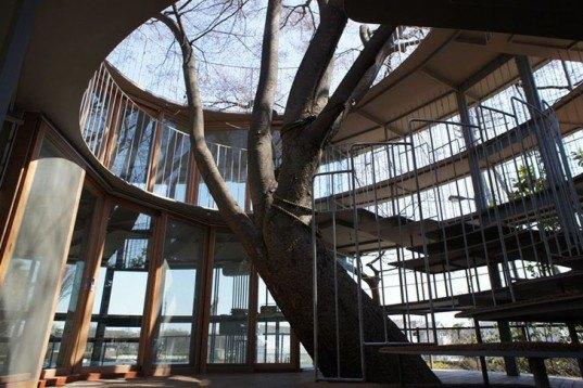 Tetzuka Architects, classroom, japan, japanese design, Fuji Kindergarten, natural light, around a tree, Zelkova tree, Air quality, Architecture, Daylighting, Botanical,