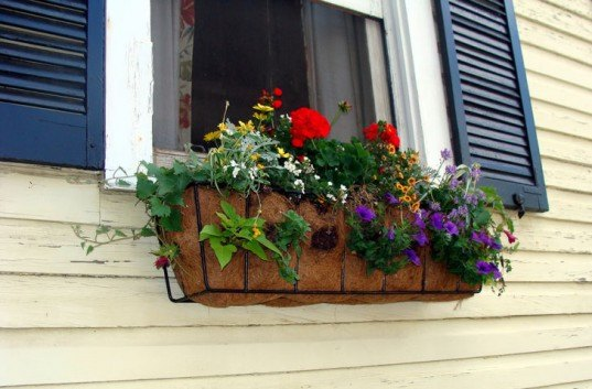 Flowers growing in window boxes