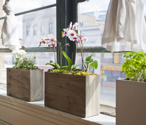 Windowsill Herb Planter: Modern Sprout: A Decorative Hydroponic Planter For Your
