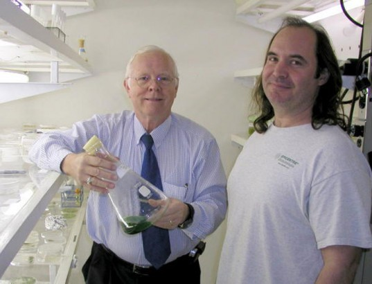 cyanobacteria, blue-green algae, dr. r. malcom brown jr, dr david nobles, university of texas at austin, nanocellulose