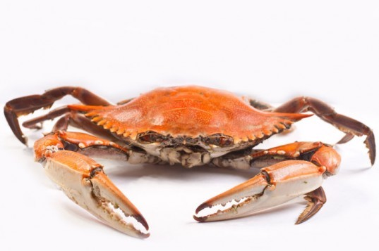 blue crabs, chesapeake bay, carbon pollution, large, predator, carbon dioxide, ocean acidification