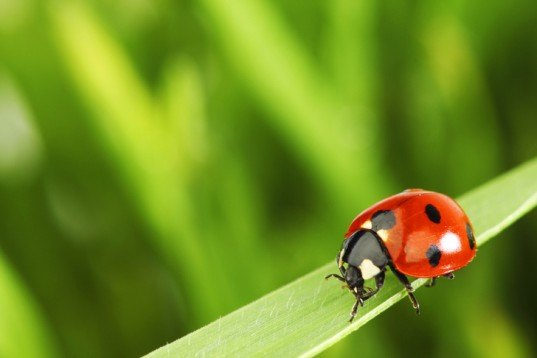green design, eco design, sustainable design, Ladybug pest control, Mall of America, natural pest defense, ladybugs mall of america