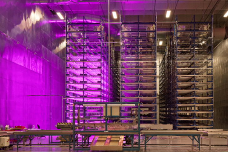 Indoor Vertical Farm Pinkhouses Grow Plants Faster With