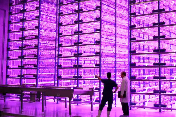 Indoor Vertical Farm 'Pinkhouses' Grow Plants Faster With Less Energy