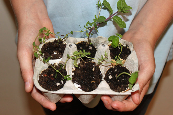 How to Grow an Herb Garden Using Eggshell Planters