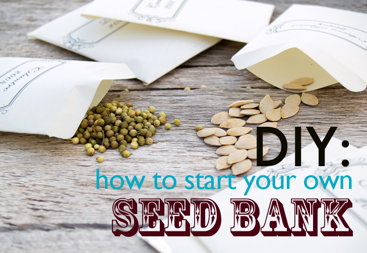 DIY: How to start a community seed bank
