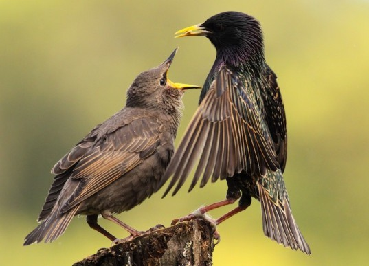 mobile phone apps, protected national parks, birds, birdsong, nature, environmental news, birdsong apps harm birds,