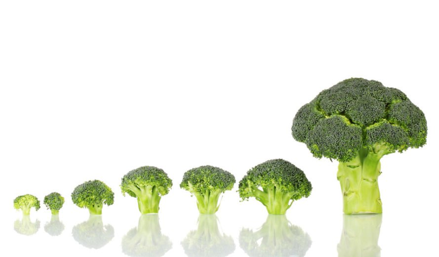 lineup of broccoli heads from smallest to tallest