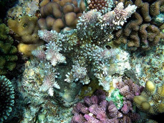 iucn, red list, threatened species, climate change, study, coral reef