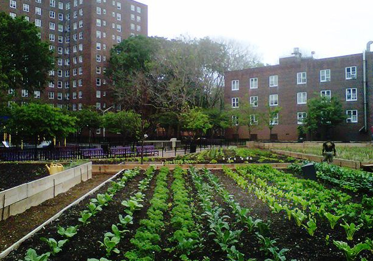 Red hook housing project s new urban farm grows fresh for Architecture jobs nyc