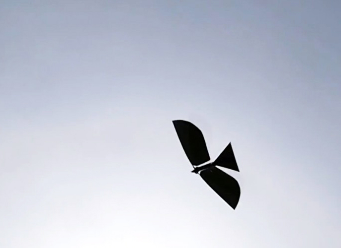 Robo Raven Robot Can Flap its Wings Like a Real Bird