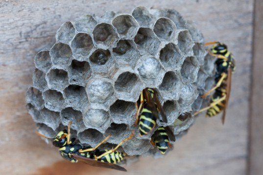 green design, eco design, sustainable design, Jonathan SImkins, wasp mega nest Florida, Jurassic Wasps