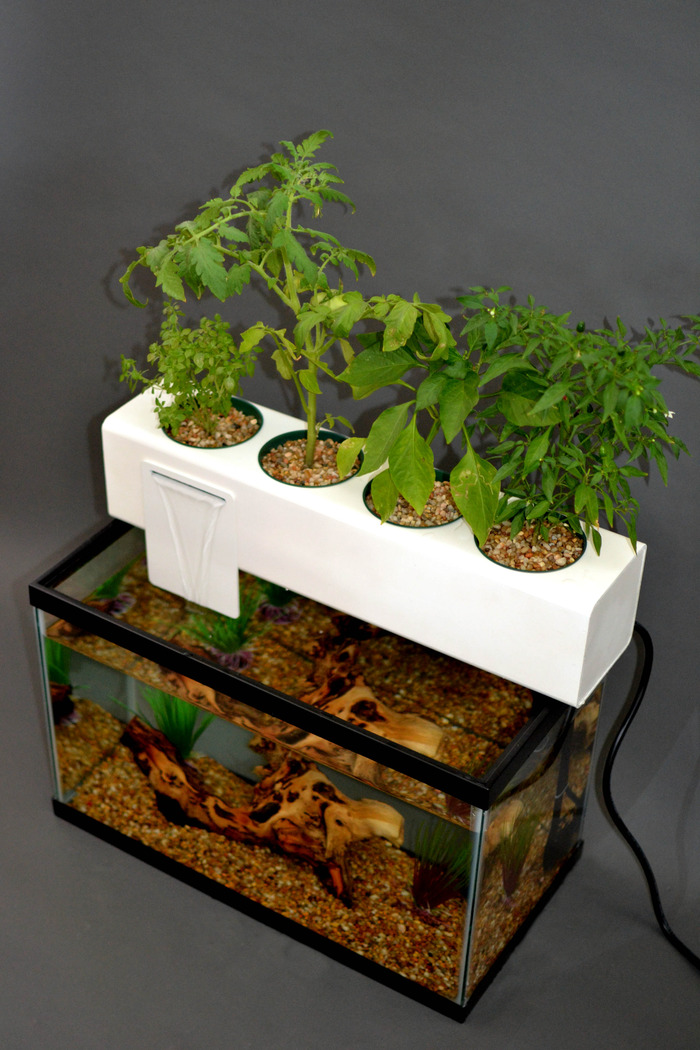 Andrew de melo 39 s blue green box uses fish waste to provide for Fish and plants in aquaponics