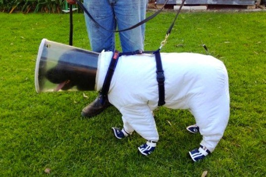 bees, pollinators, beekeepers, beekeeper's dog, Bazz the Beekeeper's dog, news, environment, agriculture, animals, American foulbrood disease, sniffer dog detects bee disease,