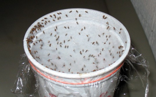 DIY 5 All Natural Insect Traps And Deterrents For Those