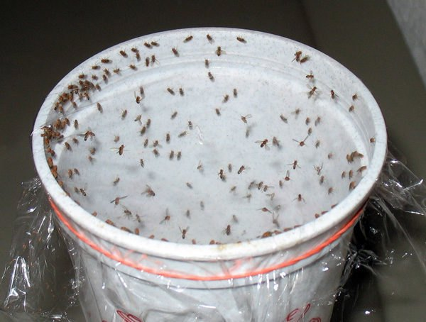 DIY: 5 All-Natural Insect Traps and