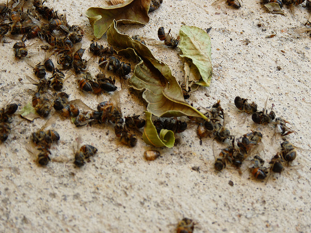 New Study Suggests Massive Bee Die-Off and Colony Collapse Caused by Combination of Factors: Fungicides Lead to Parasite Infections