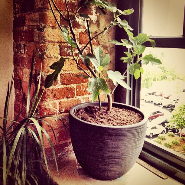 6 Surprising Fruits You Can Grow Organically Indoors in Containers ...