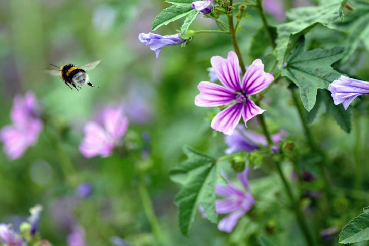 HOW TO: Attracting pollinators: Flowers that encourage bees, butterflies, and birds to visit