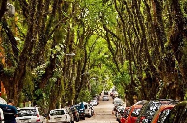 The World S Most Beautiful Street Is A Tree Filled Oasis