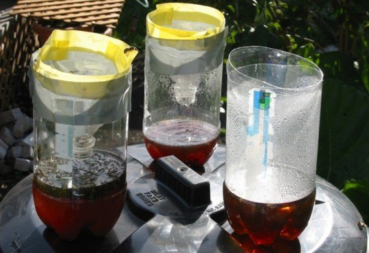 DIY: 5 All-Natural Insect Traps and Deterrents You Can Make at Home