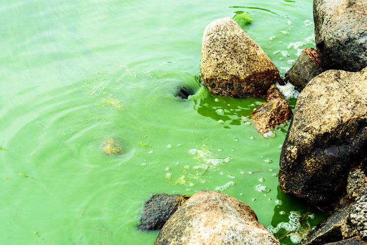 Climate Change and Agricultural Runoff to Cause Massive Algae Blooms in Lake Erie